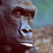 Haltung im systemischen Coaching: die Geschichte vom Affen